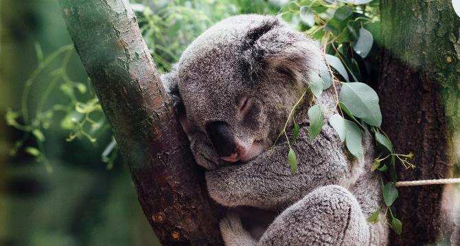 Az egészséges alvás a produktív nap titka